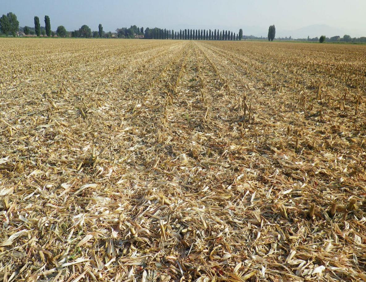 Lavorazione Del Mais.Residui Colturali Del Mais Come Gestirli In Conservativa